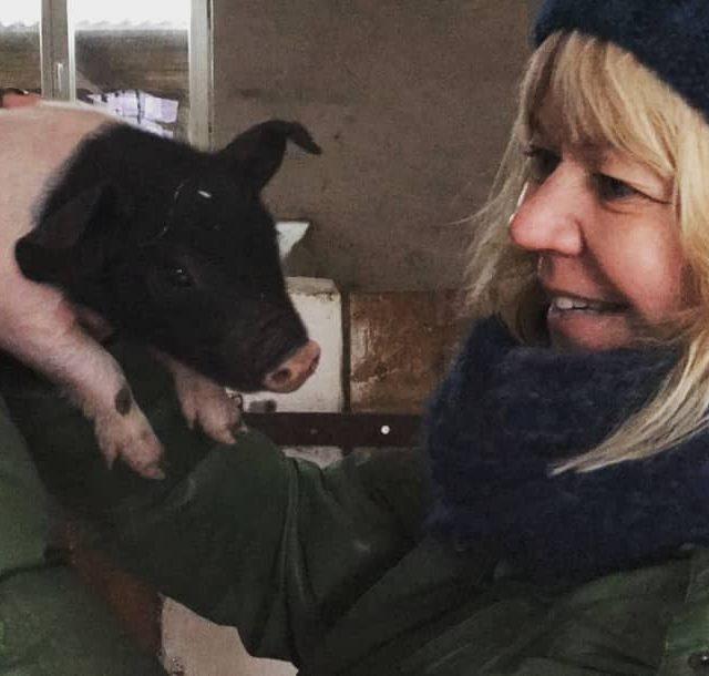 Schweingehabt sosweet istdasniedlich Jugendbauernhof selteneRasse